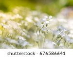 delicate small white flowers in ... | Shutterstock . vector #676586641