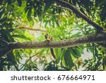A Palm Tree Squirrel Eats A...