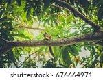 A Palm Tree Squirrel Eats A...
