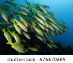 yellow fishes in the blue       ... | Shutterstock . vector #676670689