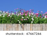 Flowers Over Bamboo Fence And...