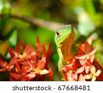 Wild Gecko In Costa Rica