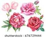 set of roses  peony  magnolia ... | Shutterstock . vector #676729444