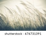 reed field waver in the wind ... | Shutterstock . vector #676731391