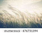 reed field waver in the wind ... | Shutterstock . vector #676731394