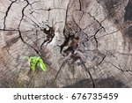 Small photo of The tree grows on dead timber. It is a fight to live go on. Is it always the way we always find it?