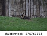 black wolf sitting in the grass ... | Shutterstock . vector #676763935
