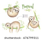 baby animals sloth nursery... | Shutterstock . vector #676799311