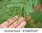 hands touch sensitive plant ... | Shutterstock . vector #676809169