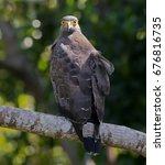 crested serpent eagle | Shutterstock . vector #676816735