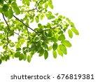 green leaves on a white...   Shutterstock . vector #676819381