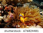 egypt   red sea   diving at... | Shutterstock . vector #676824481