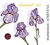irises blooming  bright ...   Shutterstock .eps vector #676873711