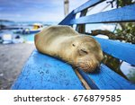 A Young Sea Lion Sleeping On A...