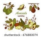 avocado varieties vector set.... | Shutterstock .eps vector #676883074
