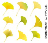 ginkgo autumn leaves fall icon | Shutterstock .eps vector #676992931
