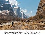 a trekking woman alone on the... | Shutterstock . vector #677005234