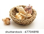 Sea Shells In The Basket