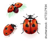 ladybird illustration. set of... | Shutterstock .eps vector #677217934