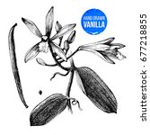 black and white vanilla plant... | Shutterstock .eps vector #677218855