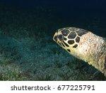 turtle head                     ...   Shutterstock . vector #677225791