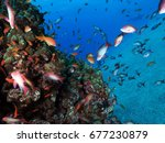fishes in the red sea    Shutterstock . vector #677230879