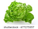 Isolated Lettuce