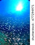 underwater | Shutterstock . vector #677294971