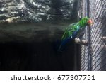 Parrot In The Cage  Captive...