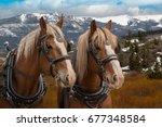 team of matching belgian draft... | Shutterstock . vector #677348584