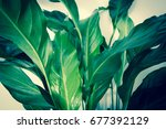 exotic plants background | Shutterstock . vector #677392129