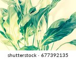 exotic plants background | Shutterstock . vector #677392135