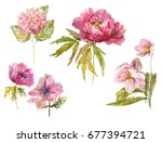 Stock photo dendritic peony wind flower hydrangea hellebore rosy flowers isolated objects hand drawn 677394721