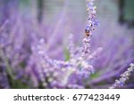 bee is swarming the bush of... | Shutterstock . vector #677423449