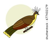 tropical bird hoatzin. colorful ... | Shutterstock .eps vector #677432179