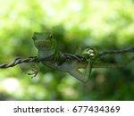 Small photo of Lizard
