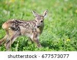baby deer  | Shutterstock . vector #677573077