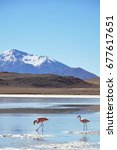 flamingos in andes  lagunas of... | Shutterstock . vector #677617651