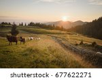 sheep in the mountains   nature ... | Shutterstock . vector #677622271