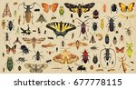 insects collection. old paper... | Shutterstock . vector #677778115