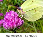 Butterfly On Flower Of The...