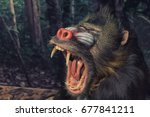 Mandrill Monkey With Wide Open...