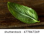Small photo of A leaf attacked by pests. List of basil infested Aleyrodoidea. Closeup.