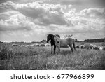 brown and white horses and... | Shutterstock . vector #677966899
