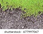Top View Close Up Green Grass...