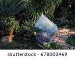 weather sensitive garden plants ...   Shutterstock . vector #678003469