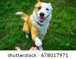 Stock photo friendly smart dog giving his paw close up 678017971