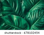 tropical leaf  large foliage ... | Shutterstock . vector #678102454