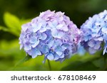 floral in the garden | Shutterstock . vector #678108469