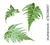 set of green fern leaves ... | Shutterstock .eps vector #678158647